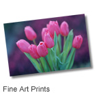 Fine Art Prints