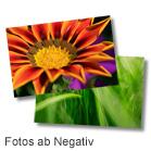 Fotos ab Negativ